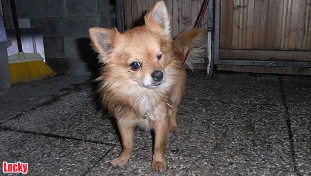 Vergabehunde und vermisste Vierbeiner (Bild: Tierschutz Alkoven)