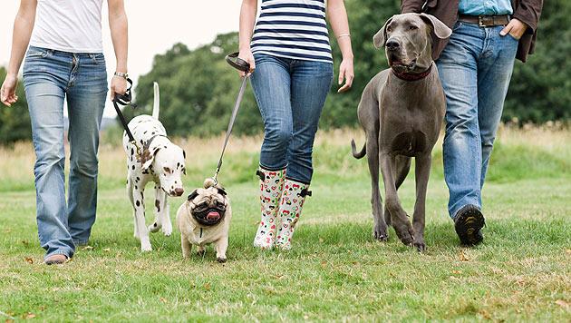 3.045 Hundebisse wurden im Jahr 2012 angezeigt (Bild: thinkstockphotos.de)