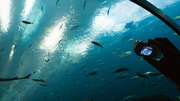 Mit einfachen Tricks tolle Aquarienfotos schießen (Bild: thinkstockphotos.de)