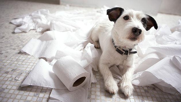 Verbotenes Terrain für Hunde: Hier darfst du nicht rein! (Bild: thinkstockphotos.de)