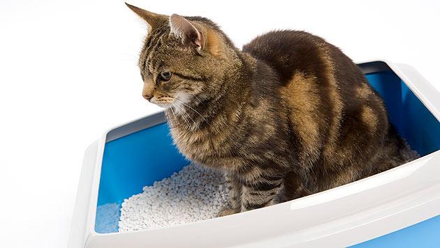 Was tun gegen Unsauberkeit bei Ihrer Katze? (Bild: thinkstockphotos.de)