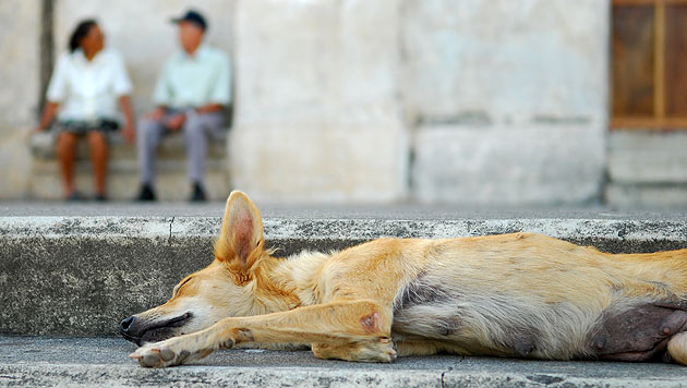 Hund geht seit Tod seines Frauchens in die Kirche (Bild: thinkstockphotos.de (Symbolbild))