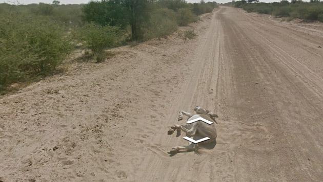 Vermeintlich toter Esel beunruhigt Street-View-Nutzer (Bild: Screenshot Google Maps)