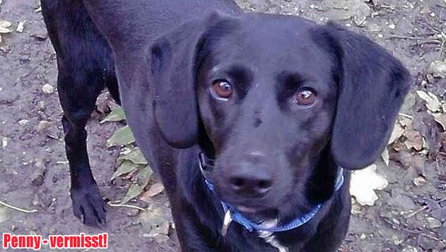 Vermisste Vierbeiner und Hunde zur Vergabe (Bild: privat)