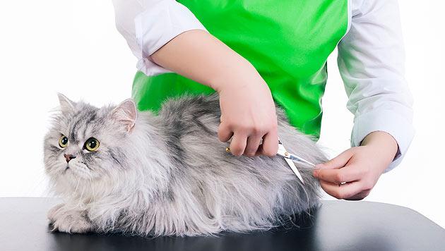 Das müssen Sie bei der Pflege Ihrer Katze beachten (Bild: thinkstockphotos.de)