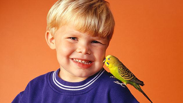 """Singvögel und Kleinkinder lernen ähnlich """"sprechen"""" (Bild: thinkstockphotos.de)"""