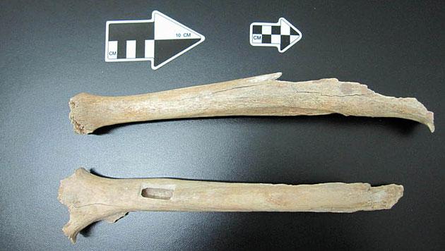 Fr�he Menschen aus China verwandt mit Ur-Amerikanern (Bild: MPI f�r evolution�re Anthropologie)