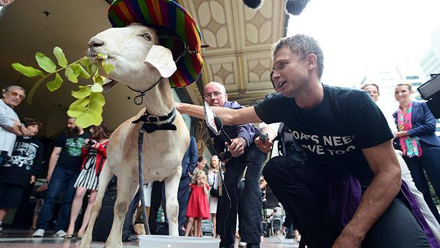 Australien: Gericht spricht gefräßige Ziege Gary frei (Bild: EPA)