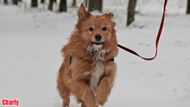 Vermisste Vierbeiner und Hunde zur Vergabe (Bild: Tierheim Linz)