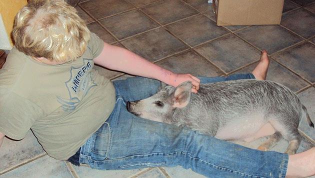 Burgenl�nder Familie ist auf das Schwein gekommen (Bild: Sigrid und Dietmar Hettlinger-Marton)