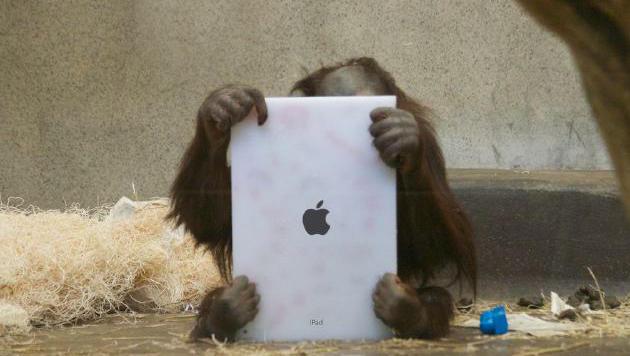 Orang-Utans in US-Tierpark spielen mit Apps auf dem iPad (Bild: S. Engel/Orangutan Outreach (Montage))