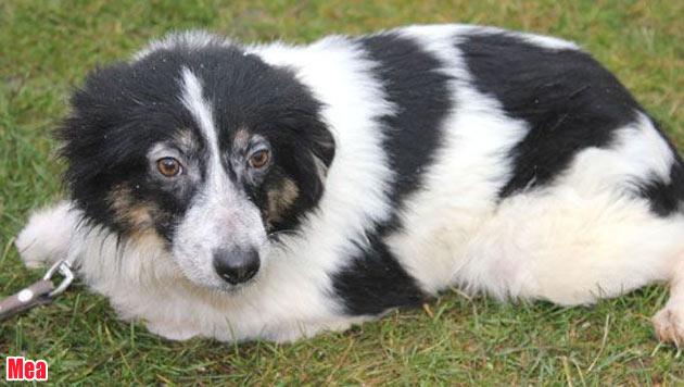 Diese Hunde suchen ein neues Zuhause (Bild: Landestierschutzverein Steiermark)