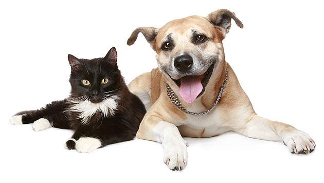Haustiere aus dem Tierheim sind nur wenig gefragt (Bild: thinkstockphotos.de)