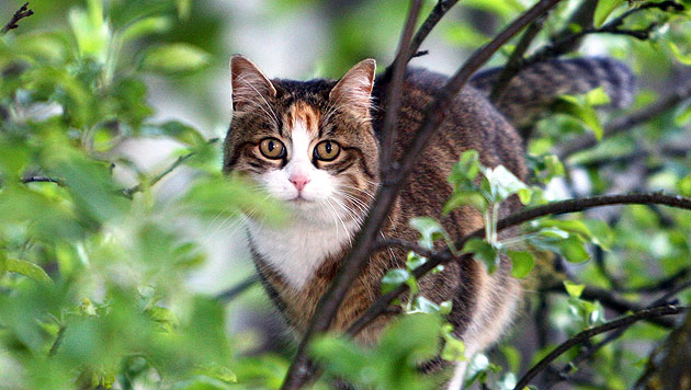 "Kampagne ""Cats to Go"": Neuseeland katzenfrei machen (Bild: dpa/Karl-Josef Hildenbrand)"