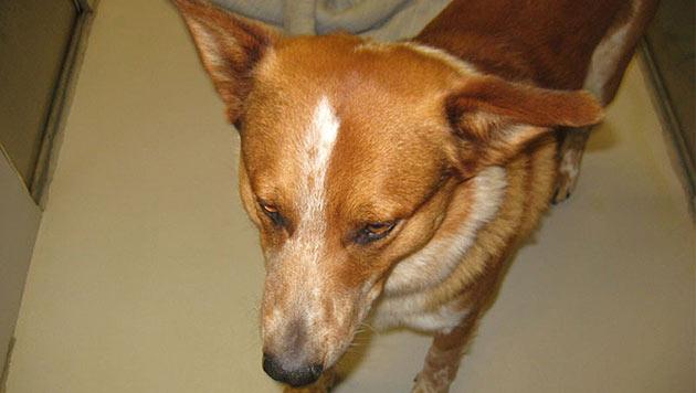 US-Hund holt Hilfe für obdachloses Herrchen (Bild: KIRO 7)