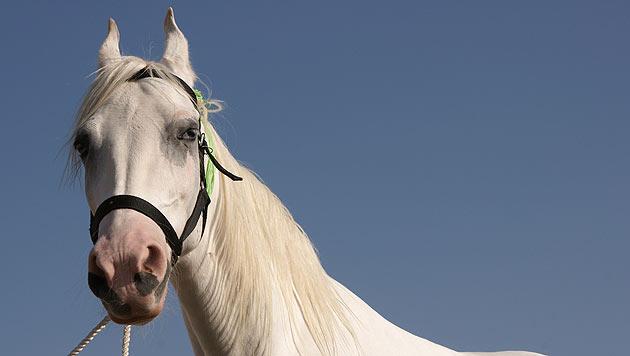 Schon wieder Pferd im Südburgenland verletzt (Bild: thinkstockphotos.de)