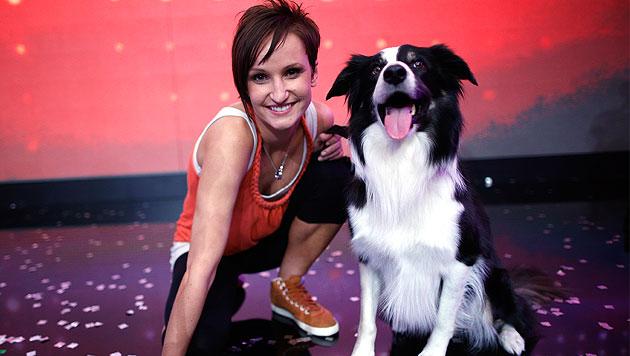 """Hund """"Esprit"""" muss acht Wochen in Krankenstand (Bild: APA/Georg Hochmuth)"""