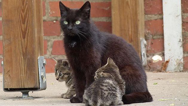"""Neue Plattform """"CAROcat"""" gegen Überpopulation (Bild: VIER PFOTEN/Klemencic)"""