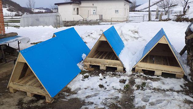 Schenke bosnischen Streunern ein Dach über dem Kopf! (Bild: Paws in Need Organisation)