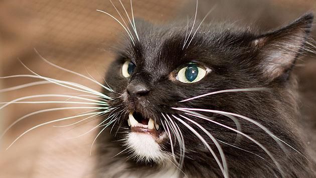 US-Amerikanerin verurteilt, weil sie Katzen piercte (Bild: thinkstockphotos.de)