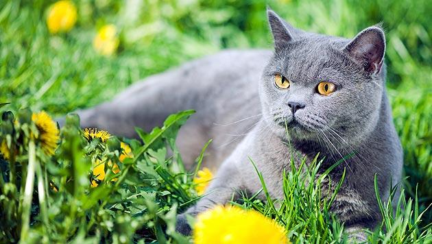 Katze machte Besitzerin auf Brand aufmerksam (Bild: thinkstockphotos.de)
