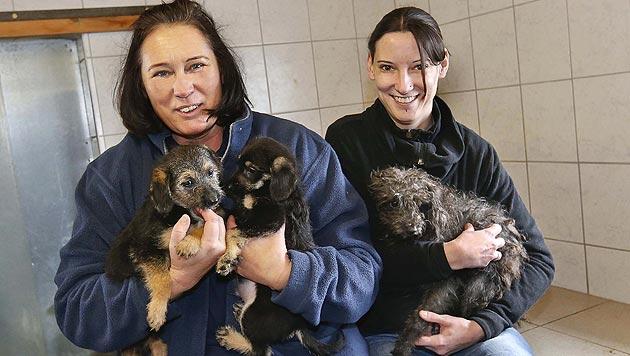 Elf verwahrloste Hunde in Salzburg beschlagnahmt (Bild: Markus Tschepp)