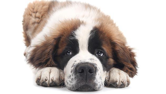 Reisender ließ Hund in Auto am Flughafen zurück (Bild: thinkstockphotos.de (Symbolbild))