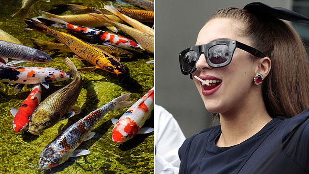 Lady Gaga kauft sich 27 Zierkarpfen gegen Langeweile (Bild: EPA)