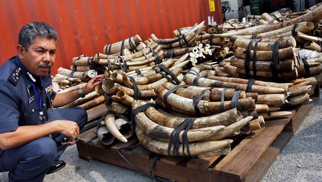 Elfenbein-Handelsverbot zur Rettung der Elefanten (Bild: EPA)