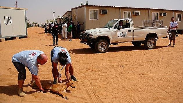 """""""Vier Pfoten"""" im Einsatz für Streuner im Sudan (Bild: Vier Pfoten)"""