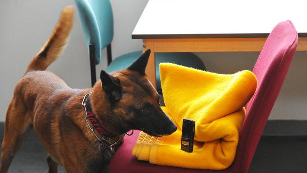 Deutschlands erster Handyspürhund tritt Dienst an (Bild: dpa/Matthias Hiekel)