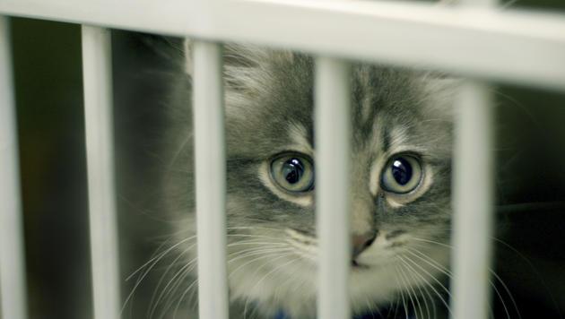 So gewöhnen Sie eine Katze aus dem Tierheim ein (Bild: thinkstockphotos.de)