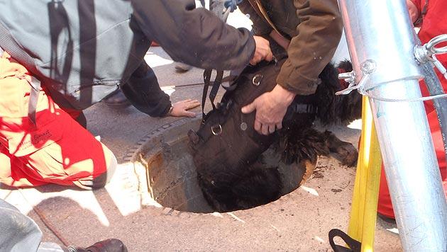 Feuerwehr rettet Hund in Graz aus Vier-Meter-Schacht (Bild: Berufsfeuerwehr Graz)