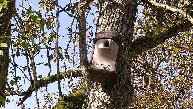 Singvögel finden kaum noch Wildnis für Nester vor (Bild: Lampelsberg)