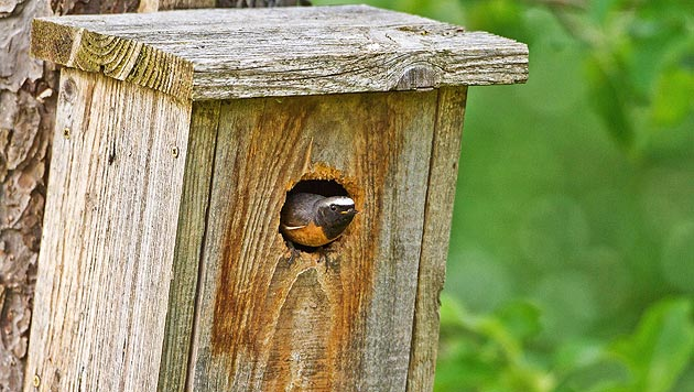So füttern Sie Wildvögel im Winter richtig (Bild: M. Tiefenbach)