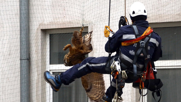 Uhu in Not von Höhenrettern in Wien befreit (Bild: APA/MA 68 LICHTBILDSTELLE)