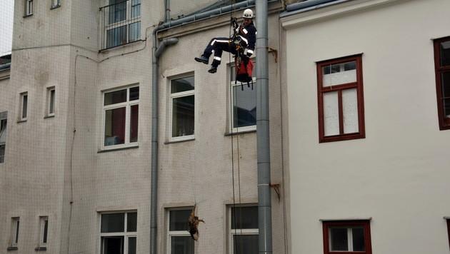 Uhu in Not von Höhenrettern in Wien befreit (Bild: MA 68 Lichtbildstelle)