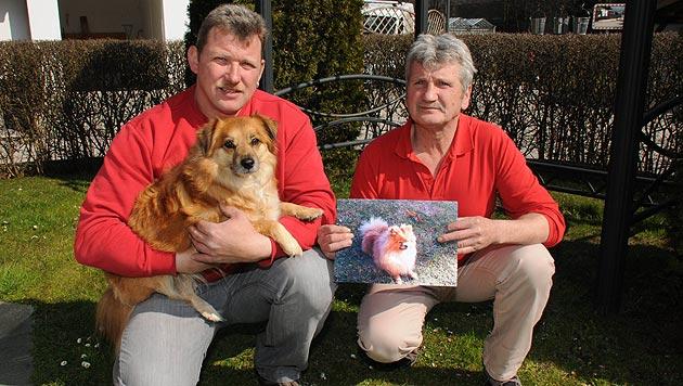 """Zwergspitz """"Coco"""" starb durch Köder mit Rattengift (Bild: ZOOM-Tirol)"""