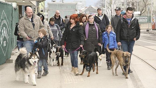 """Busreise für guten Zweck: """"The Walk"""" sucht Teilnehmer (Bild: Hunde in Not Österreich)"""