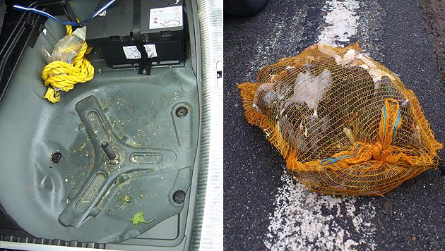 Deutscher versteckt 25 Tauben unter dem Reservereifen (Bild: Landespolizeidirektion)