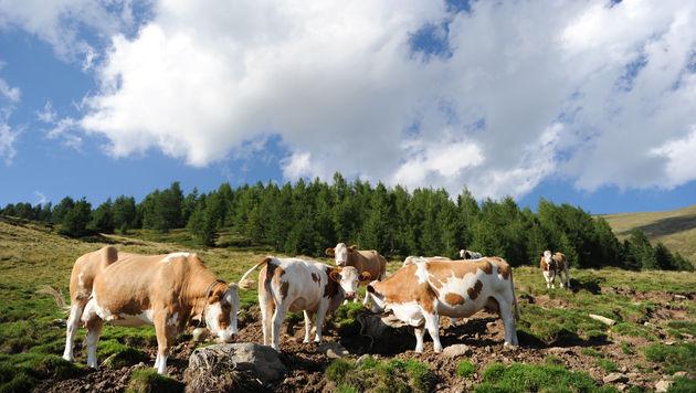 Flächenzahlungen in Ö: EU fordert 64,2 Millionen € zurück (Bild: APA/BARBARA GINDL)