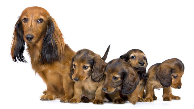Radlerin wegen Hund gestürzt - OGH rügt Halter (Bild: Photos.com/Getty Images (Symbolbild))