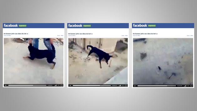 Facebook weigert sich, Tierquäler-Video zu löschen (Bild: Screenshots Facebook)