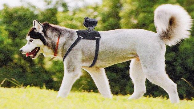 Sony will Kamera-Montageset für Hunde verkaufen (Bild: Sony)