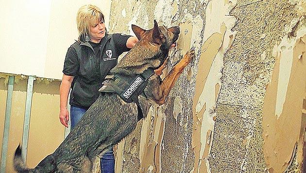 Spezielle Suchhunde spüren jetzt Schimmel auf (Bild: Gerhard Bartel)