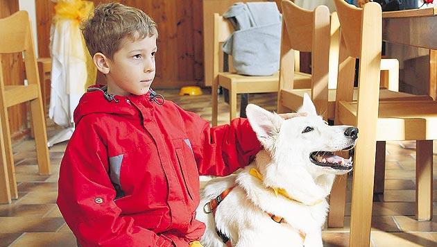 Tierschutzstiftung hilft Kind mit seiner Angst vor Hunden (Bild: Tierschutzstiftung)