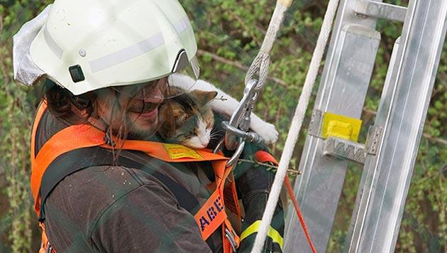 Wölfe jagten Katze in steirischem Tierpark auf Baum (Bild: APA/Walter Zengerer)