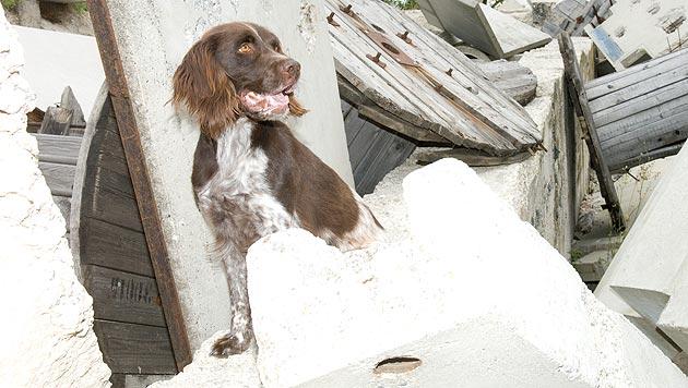 Rettungshunde absolvierten mehr als 2.000 Einsätze (Bild: Johanniter)