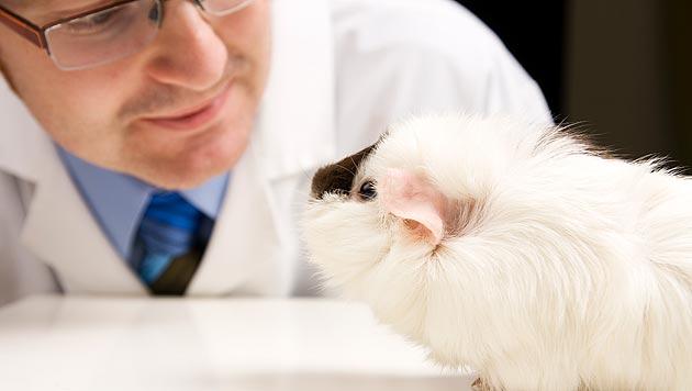 """""""Noch immer keine Reduzierung der Tierversuche"""" (Bild: thinkstockphotos.de)"""