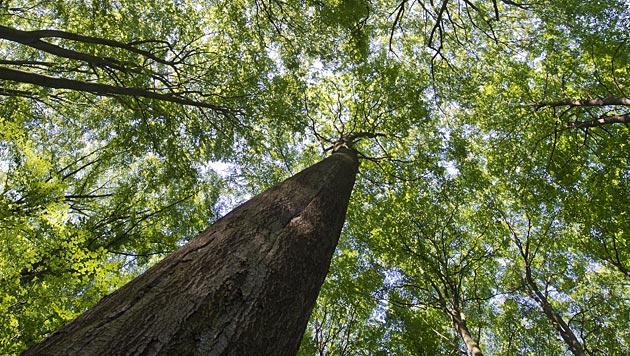 Umweltschützer alarmiert: Au-Wälder in Gefahr? (Bild: APA/dpa/Patrick Pleul)
